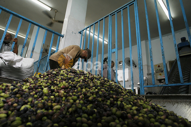 Palestinian workers sort olives before pressing at a traditional stone press in Rafah in southern Gaza Strip on Oct. 11, 2014. Farmers are harvesting their olives from mid-October until the start of November this year. Photo by Abed Rahim Khatib