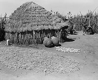 Karamoja, Uganda , Africa. - Village hut and sorgum harvest