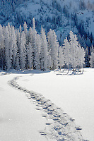 Snow shoe tracks at Anthony Lakes in winter