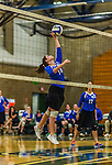 1 November 2015: Yeshiva University Maccabee Setter and Defensive Specialist Emily Rohan, a Senior from Dallas, TX, jumps for a hit against the Saint Joseph College Bears at SUNY Old Westbury in Old Westbury, NY. The Bears shut out the Maccabees 3-0 in NCAA women's volleyball, Skyline Conference play. Mandatory Credit: Ed Wolfstein Photo *** RAW (NEF) Image File Available ***