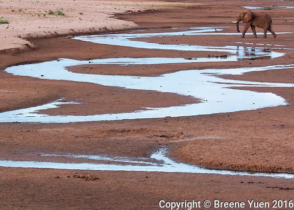 Elephant and Winding Stream  Kenya 2015