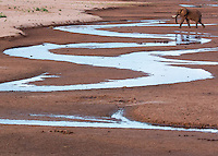 Elephant and Winding Stream  Kenya 2015