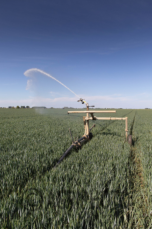 21.5.2020 Irrigating Winter Wheat in the Lincolnshire Fens <br /> ©Tim Scrivener Photographer 07850 303986<br />      ....Covering Agriculture In The UK....