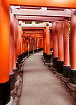 Senbon torii, a long empty path of Vermillion red Torii gates at Fushimi Inari Taisha shrine in Kyoto, Japan 2017