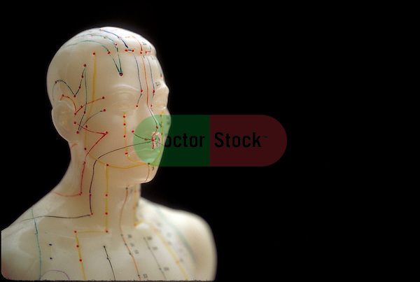 model showing meridians and points for acupuncture