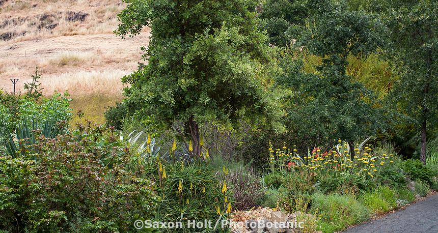 No summer water garden, Judy Adler Garden, Walnut Creek, California