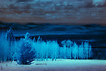 Ethereal: Aspens, San Francisco Peaks, Arizona (Infrared) ©2017 James D Peterson.  A late winter day with broken clouds and melting snow creates a mystic mood in infrared.