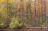 63895-15713 Fall Color Pyramid Lake State Recreation Area Perry Co. IL