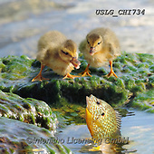 CHIARA,REALISTIC ANIMALS, REALISTISCHE TIERE, ANIMALES REALISTICOS, paintings+++++,USLGCHI734,#A#, EVERYDAY ,photos