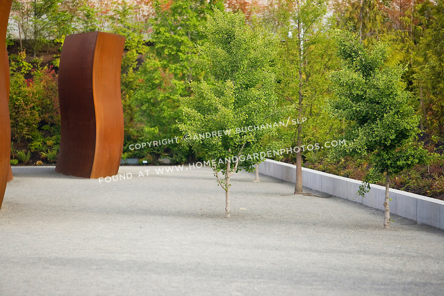 "Here, interspersed among Richard Serra's, ""Wake"" are lone gingko trees.  Set amidst a field of plain gravel, the space surrounding and within the individual pieces and trees becomes as much a part of the sculpture as the pieces themselves.   SAM's Olympic Sculpture Park, Seattle, WA."