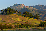 Morning light over hills in Spring with purple wildflowers, green grass, and oak trees, near Ojai, California