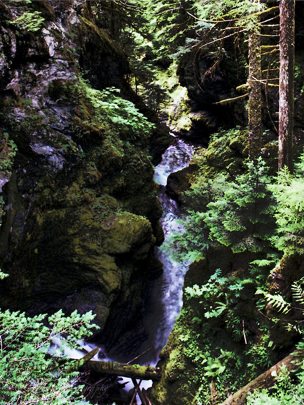 Ruth Creek descending through narrow dark canyon in deep forest.