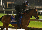 November 01, 2018 : Marley's Freedom in preparation for the Breeders' Cup on November 01, 2018 in Louisville, KY.  Candice Chavez/ESW/CSM