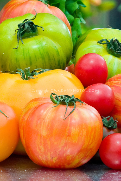 Tomatoes, various, heirloom, striped, cherry, yellow, green, brown, harvested