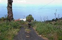 Back of local Canarian man carrying a large bundle of green plants/ food to his goats. La Palma, Canary Islands,