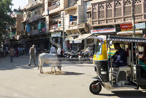 Jodhpur, India. Street scene with cow.