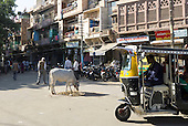 Jodhpur, India. Street scene with cow.