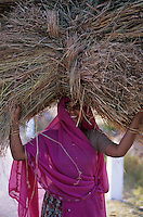 India, Rajasthan, Local girl carrying dried grass | Indien, Rajasthan, Einheimische traegt Last auf dem Kopf