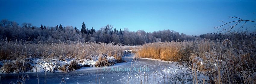 Winter,  border between Poland and Belorus. Bialowieza forest, Poland.<br /> This wild part of Poland is home to bison, wolves and bears.