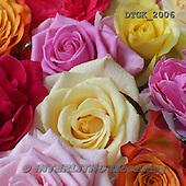 Gisela, FLOWERS, BLUMEN, FLORES, photos+++++,DTGK2006,#f#