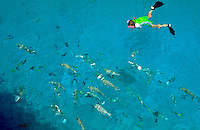 A snorkeler observing a school of colorful fish in the crystal blue water at Beaver Cay, Great Barrier Reef, Australia.