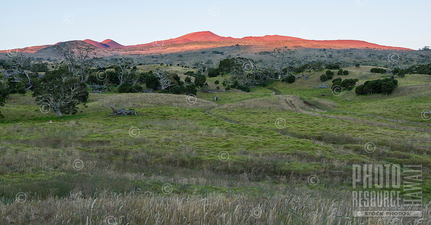 Sunrise over Mauna Kea, with green hills and trees in the foreground, Big Island.