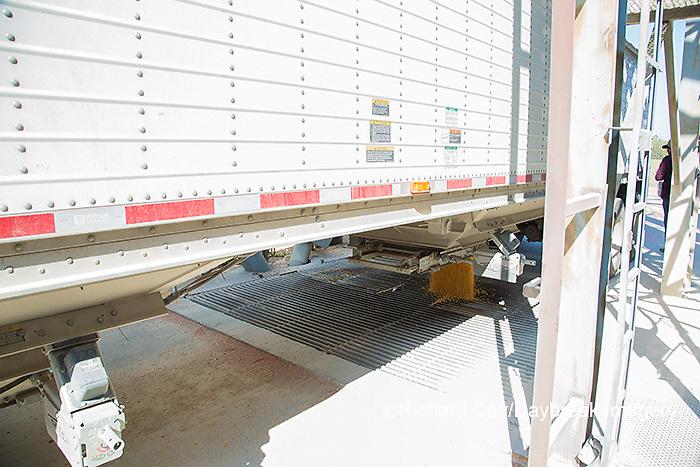 63801-08103 Dumping corn into Grain Bins for storage Marion Co. IL
