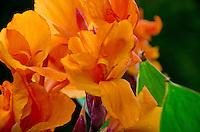 Flower at Wegerzyn Gardens