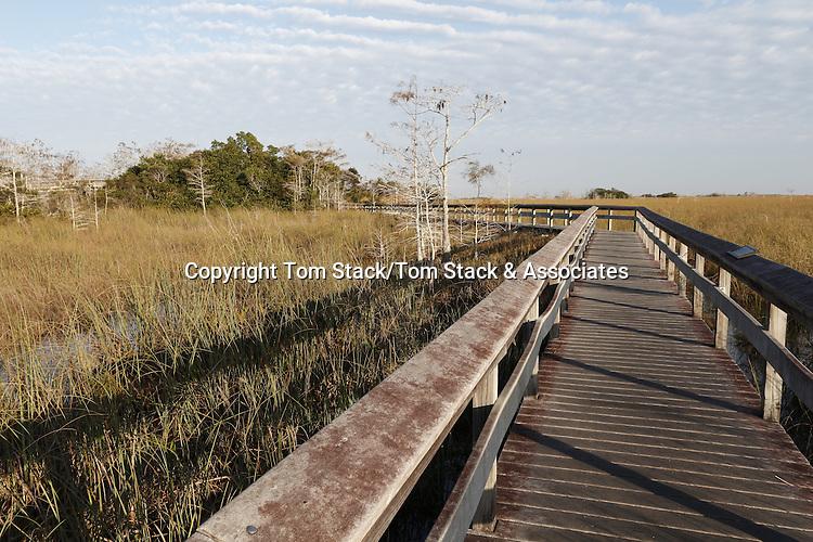 Boardwalk through sawgrass, Everglades National Park, Florida