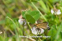 03673-001.01 Swarthy Skipper (Nastra lherminier) on White Clover (Trifolium repens) Prairie Ridge SNA Jasper Co. IL