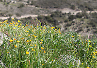 Wild flowers and grass glancing over a mountain cliff in Cyprus.