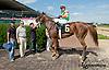 Edyanne winning at Delaware Park on 8/15/13