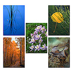 nature image note cards by Colorado photographer, James Frank, blank inside, set of 10 cards (2 each of 5)