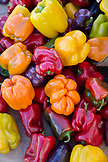USA, Oregon, Ashland, Barking Moon Farm bell peppers for sale at the Rogue Valley Growers and Crafters Market