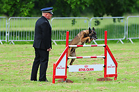 Pictured: PS Berry and PS Tommy take part in the 59th National Police Dog Trials at Tredegar House, near Newport, Wales, UK. Friday 17 May 2019<br /> Re: 59th National Police Dog Trials where teams from Police Forces from around the UK compete to be crowned the national winner at Tredegar House, near Newport, Wales, UK.