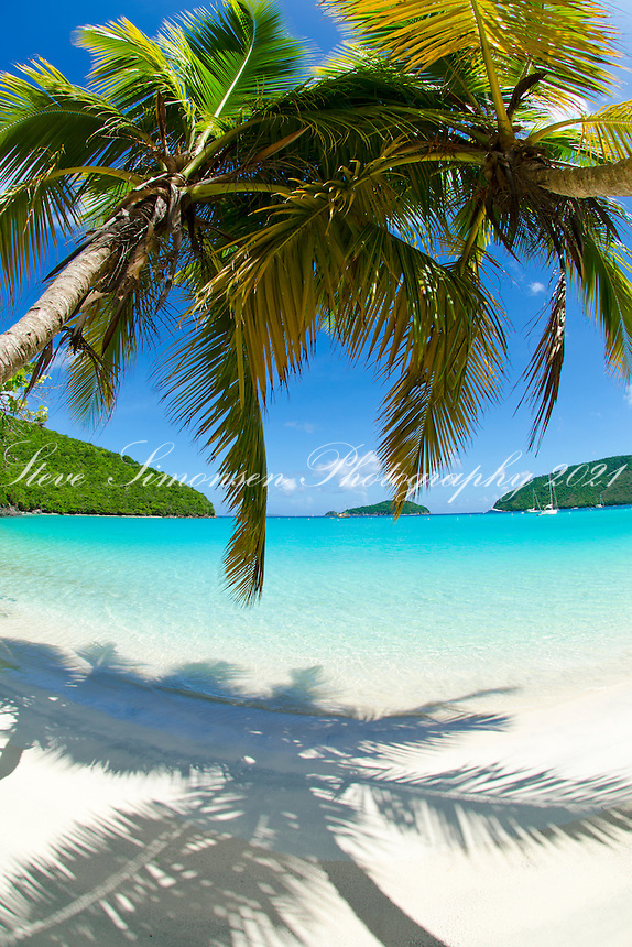 Palm trees at Maho Bay.Virgin Islands National Park.St. John, U.S. Virgin Islands