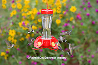 01162-12702 Ruby-throated Hummingbirds (Archilochus colubris) at feeder near flower garden,  Marion Co.  IL