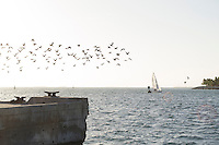 A flock of birds takes flight from the docks near Mallory Square in Key West, facing toward Sunset Key.