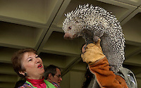 TALLAHASSEE, FL. 4/13/05-Rep. Faye Culp , R-Tampa, looks at a South American Porcupine held by Melinda Mendolusky of the Lowry Park Zoo,  Thursday during Hillsborough County Day at the Capitol in Tallahassee. Some 28 organizations traveled to the Capitol to display the food, music and attractions of Hillsborough County. COLIN HACKLEY PHOTO