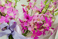Dendrobium Queen Elizabeth II orchid, cut flowers with bow, hybrid of Emma Zunz x Lakshmie Wickramasinghe, 2009 cross