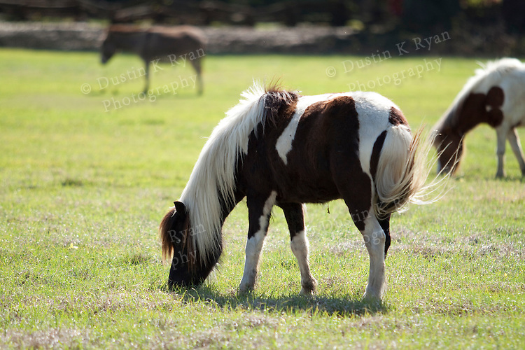 Magnolia plantation south carolina pony, horses
