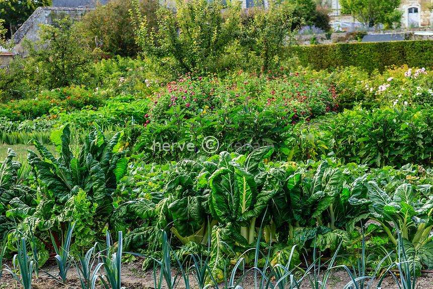 France, Sarthe (72), Le Lude, château et jardins du Lude, le potager, poireaux, bettes, aubergines, zinnias...