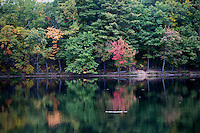 Changing fall leaves hang on trees in Puffer's Pond Conservation Area in Amherst, Massachusetts, USA.