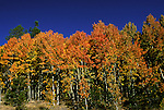 California, Lake Tahoe.  Fall color near Lake Tahoe.  Photo cataho107.  Photo copyright Lee Foster, 510/549-2202, lee@fostertravel.com, www.fostertravel.com