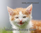 REALISTIC ANIMALS, REALISTISCHE TIERE, ANIMALES REALISTICOS, cats, paintings+++++,USLGSC162044522,#A#, EVERYDAY ,photos,fotos,pounce,cat,cats,kitten,kittens,Seth