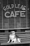 Dog on cafe bench Arizona, Gold Leag Cafe with dog, Bennett, Black and White Photographs, Black & White Photo's, B&W Photographs,  B&W, Black and White, Fine Art Photography, photography, photo, Black, White, Black and White Photo's, Black and White Pictures, Fine Art Photography by Ron Bennett, Fine Art, Fine Art photography, Art Photography, Copyright RonBennettPhotography.com ©