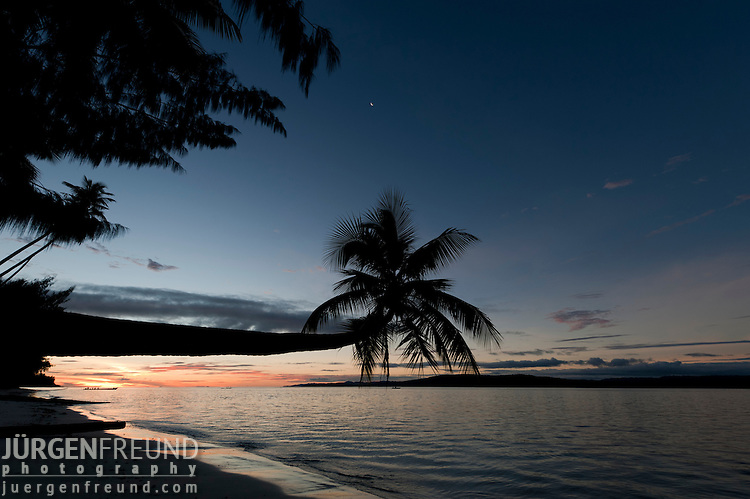 Leaning coconut tree at sunset