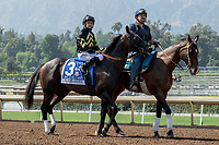 "ARCADIA, CA. JUNE 3: #3 Bal a Bali ridden by Mike Smith in the post  parade  before the Shoemaker Mile (Grade l), Breeders' Cup ""Win and You're In"" race on June 3, 2017, at Santa Anita Park in Arcadia, CA. (Photo by Casey Phillips/Eclipse Sportswire/Getty Images)"