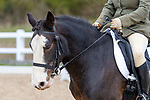 05/04/2019 - Class 4 - British Dressage - Brook Farm training centre