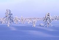 Besneeuwde taiga, Finland